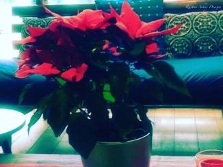 christmas-flower-001